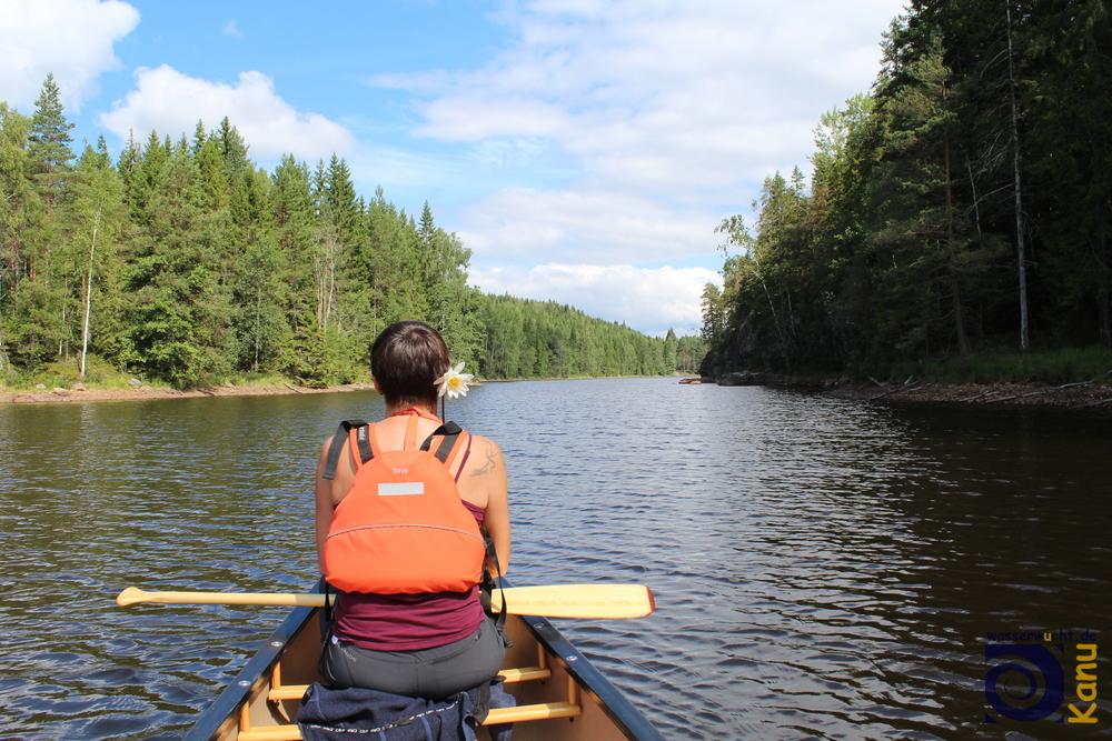 Im Naturreservat Glaskogen, Schweden.