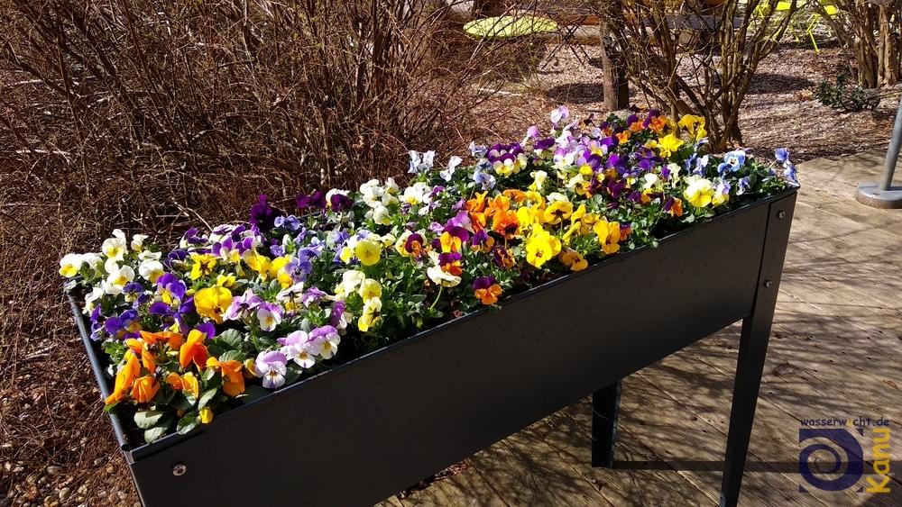 Der Frühling lässt sich aber erahnen...